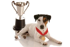 A dog lying down next to a trophy
