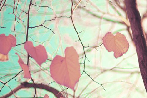 Trees hearts
