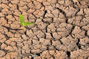 An image of dry arid ground with a single green plant breaking through