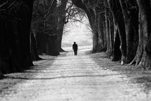 A foggy forest path