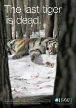 IFAW - tiger