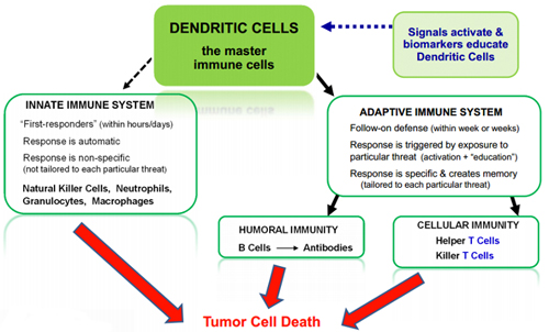 Dendritic Cell Immunotherapy - Northwest Biotherapeutics