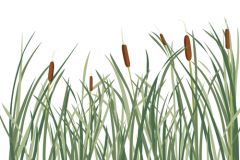 The reed that bends: pharma needs to adapt to cultural sensitivities