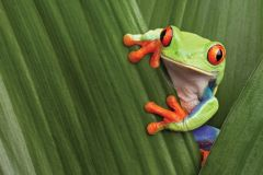 Strategic planning in pharma and avoiding frog soup