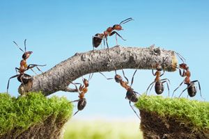 work-together-ants