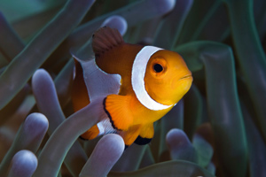 A tropical fish hiding in some coral