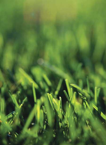 A close-up of grass