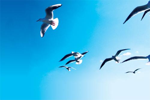 Blue sky birds feature