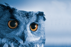An owl's face against a blue background