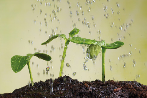 Early asset development seedlings